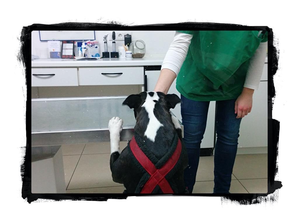 Henry liebt den Tierarzt